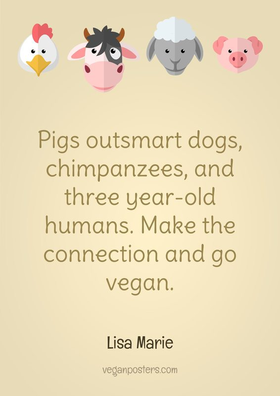 Pigs outsmart dogs, chimpanzees, and three year-old humans. Make the connection and go vegan.