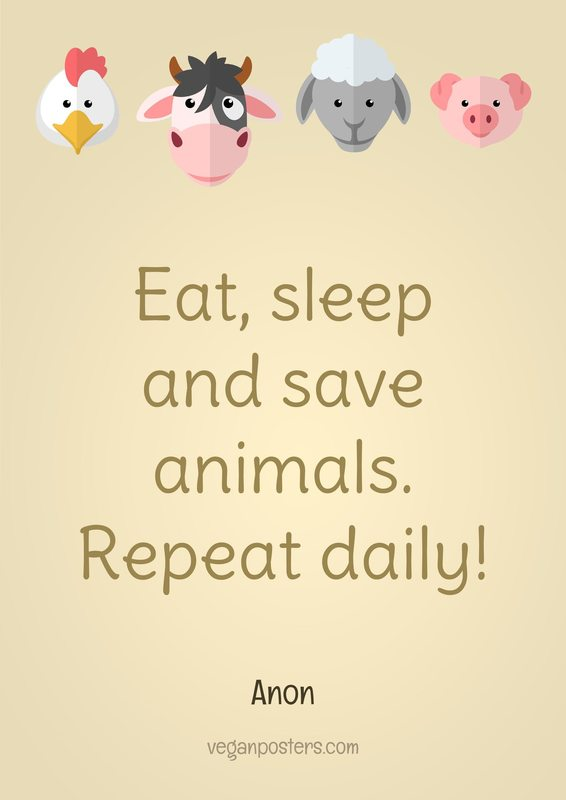 Eat, sleep and save animals. Repeat daily!