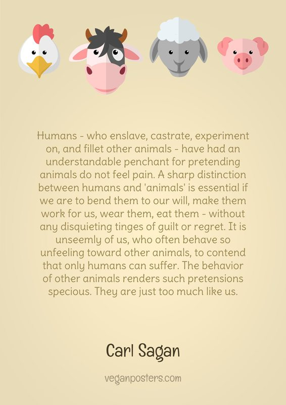Humans - who enslave, castrate, experiment on, and fillet other animals - have had an understandable penchant for pretending animals do not feel pain. A sharp distinction between humans and 'animals' is essential if we are to bend them to our will, make them work for us, wear them, eat them - without any disquieting tinges of guilt or regret. It is unseemly of us, who often behave so unfeeling toward other animals, to contend that only humans can suffer. The behavior of other animals renders such pretensions specious. They are just too much like us.