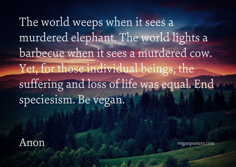 The world weeps when it sees a murdered elephant. The world lights a barbecue when it sees a murdered cow. Yet, for those individual beings, the suffering and loss of life was equal. End speciesism. Be vegan.