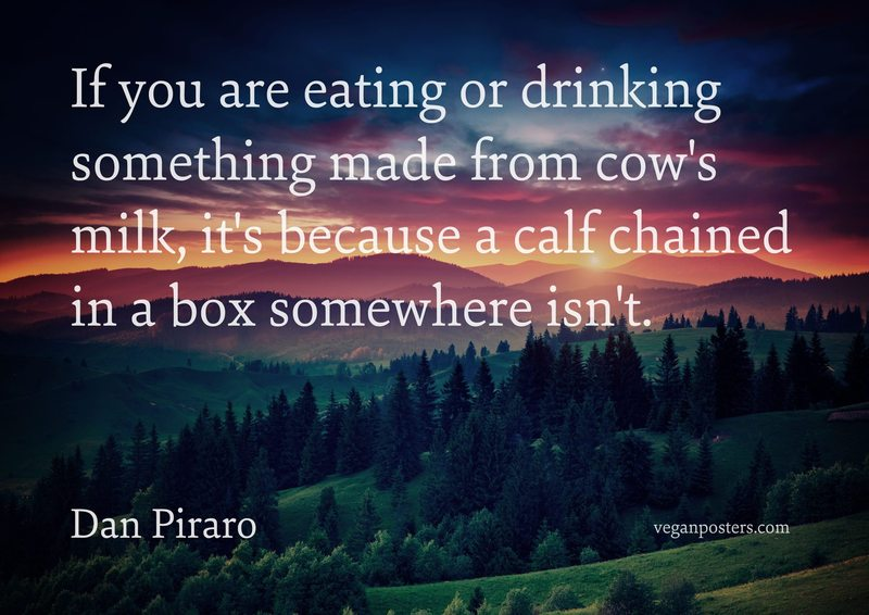 If you are eating or drinking something made from cow's milk, it's because a calf chained in a box somewhere isn't.