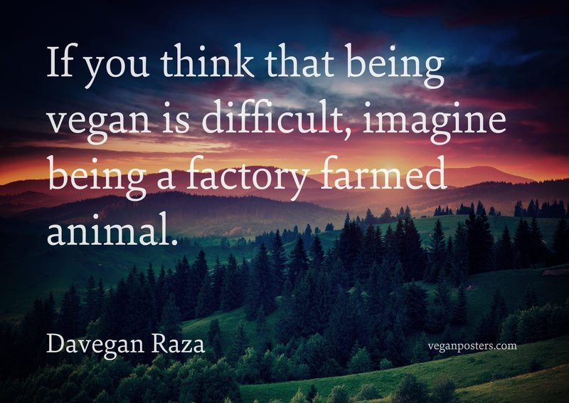 If you think that being vegan is difficult, imagine being a factory farmed animal.