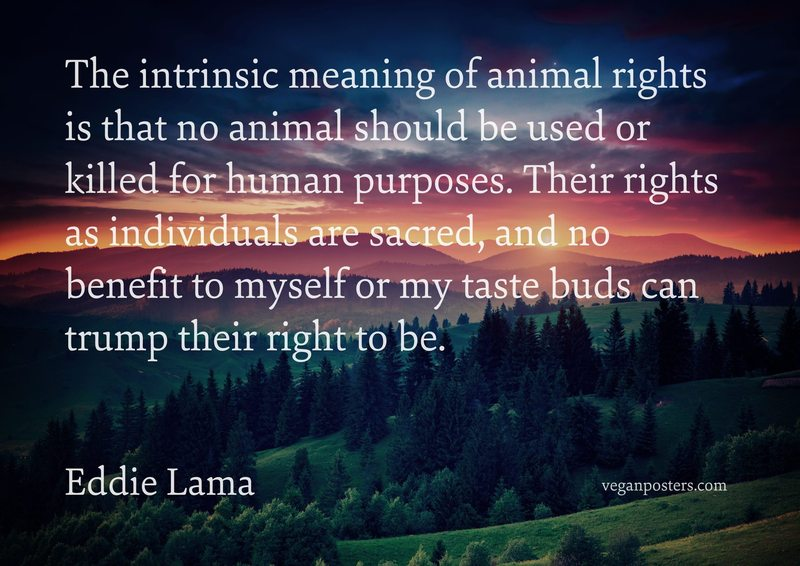 The intrinsic meaning of animal rights is that no animal should be used or killed for human purposes. Their rights as individuals are sacred, and no benefit to myself or my taste buds can trump their right to be.