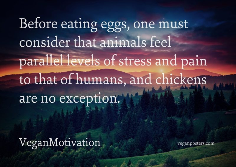 Before eating eggs, one must consider that animals feel parallel levels of stress and pain to that of humans, and chickens are no exception.