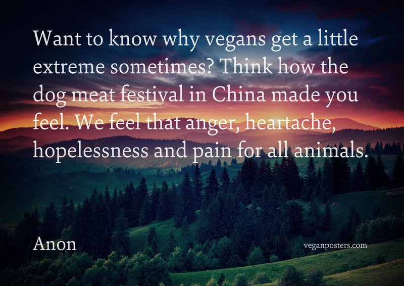 Want to know why vegans get a little extreme sometimes? Think how the dog meat festival in China made you feel. We feel that anger, heartache, hopelessness and pain for all animals.