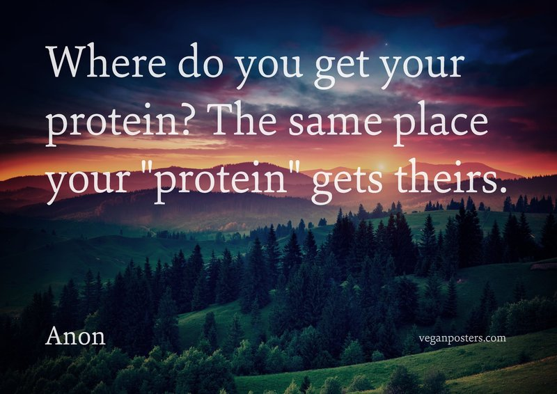 "Where do you get your protein? The same place your ""protein"" gets theirs."
