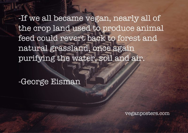 If we all became vegan, nearly all of the crop land used to produce animal feed could revert back to forest and natural grassland, once again purifying the water, soil and air.