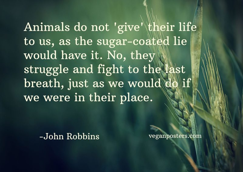 Animals do not 'give' their life to us, as the sugar-coated lie would have it. No, they struggle and fight to the last breath, just as we would do if we were in their place.