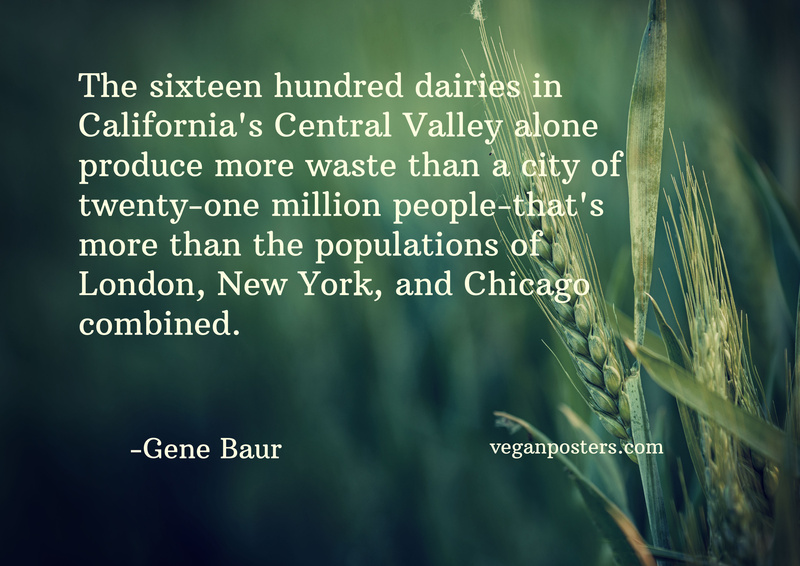 The sixteen hundred dairies in California's Central Valley alone produce more waste than a city of twenty-one million people-that's more than the populations of London, New York, and Chicago combined.