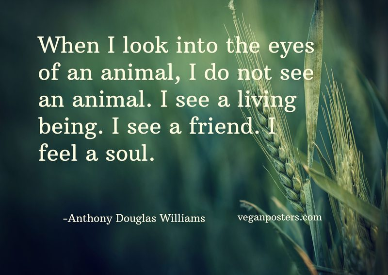 When I look into the eyes of an animal, I do not see an animal. I see a living being. I see a friend. I feel a soul.