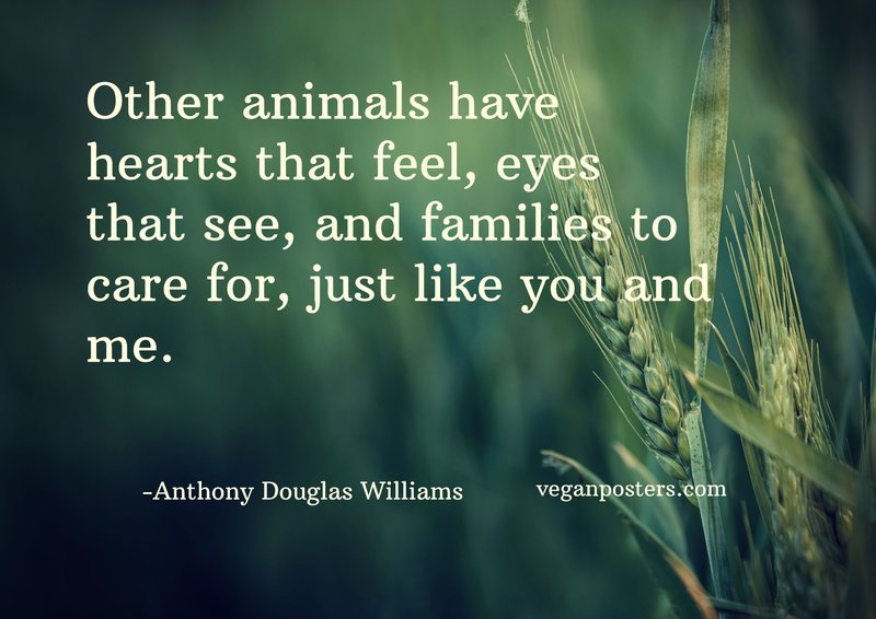 Other animals have hearts that feel, eyes that see, and families to care for, just like you and me.