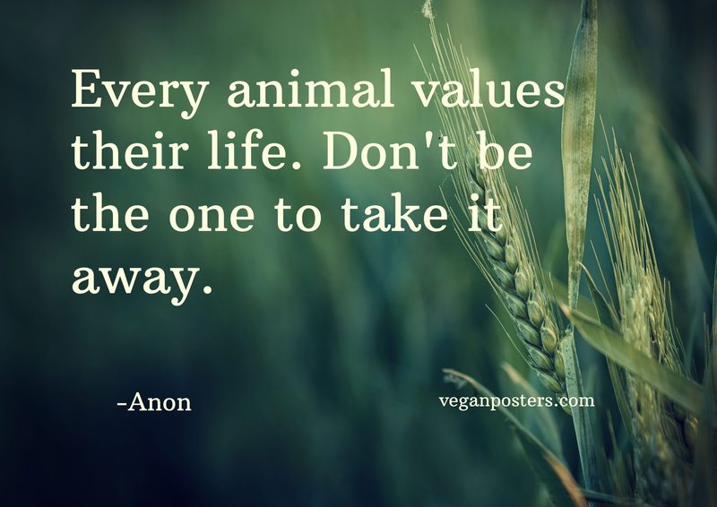 Every animal values their life. Don't be the one to take it away.