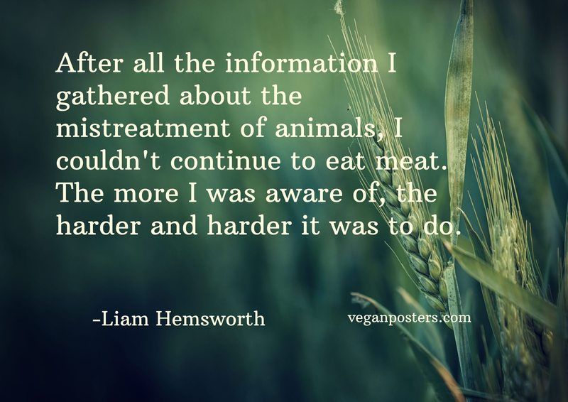 After all the information I gathered about the mistreatment of animals, I couldn't continue to eat meat. The more I was aware of, the harder and harder it was to do.