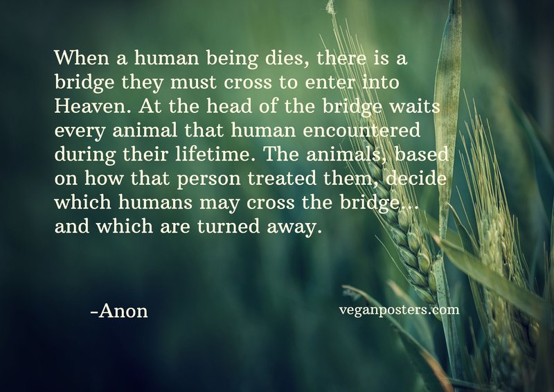 When a human being dies, there is a bridge they must cross to enter into Heaven. At the head of the bridge waits every animal that human encountered during their lifetime. The animals, based on how that person treated them, decide which humans may cross the bridge… and which are turned away.