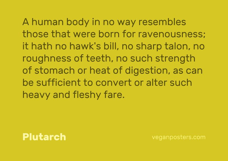 A human body in no way resembles those that were born for ravenousness; it hath no hawk's bill, no sharp talon, no roughness of teeth, no such strength of stomach or heat of digestion, as can be sufficient to convert or alter such heavy and fleshy fare.