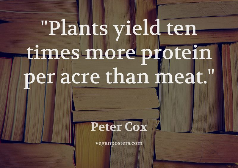 Plants yield ten times more protein per acre than meat.
