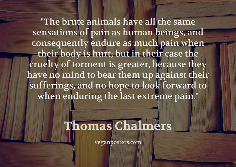 The brute animals have all the same sensations of pain as human beings, and consequently endure as much pain when their body is hurt; but in their case the cruelty of torment is greater, because they have no mind to bear them up against their sufferings, and no hope to look forward to when enduring the last extreme pain.
