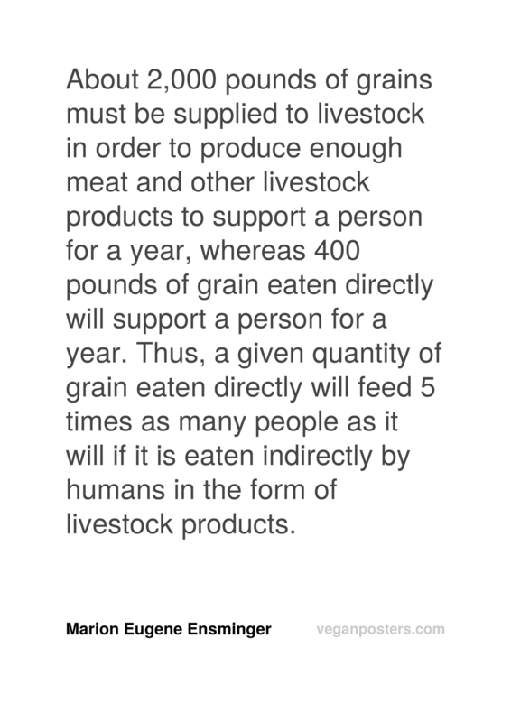 About 2,000 pounds of grains must be supplied to livestock in order to produce enough meat and other livestock products to support a person for a year, whereas 400 pounds of grain eaten directly will support a person for a year. Thus, a given quantity of grain eaten directly will feed 5 times as many people as it will if it is eaten indirectly by humans in the form of livestock products.
