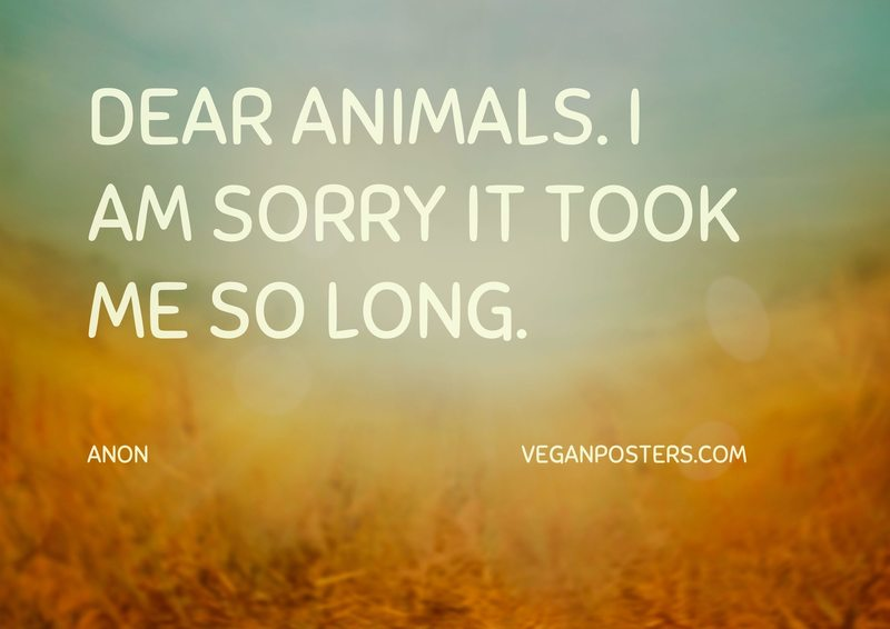 Dear animals. I am sorry it took me so long.