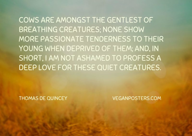 Cows are amongst the gentlest of breathing creatures; none show more passionate tenderness to their young when deprived of them; and, in short, I am not ashamed to profess a deep love for these quiet creatures.