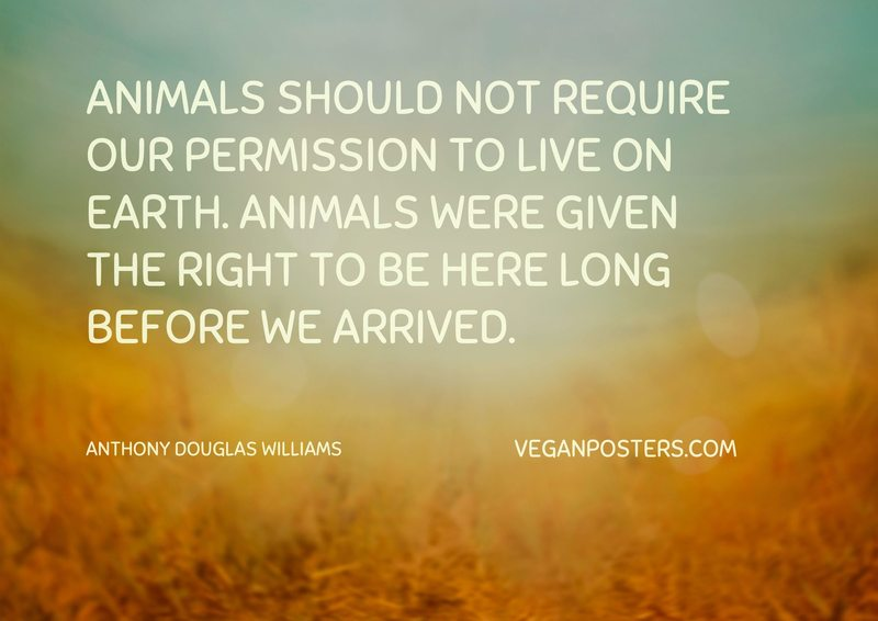 Animals should not require our permission to live on earth. Animals were given the right to be here long before we arrived.