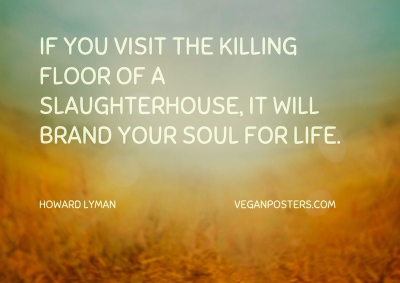 If you visit the killing floor of a slaughterhouse, it will brand your soul for life.