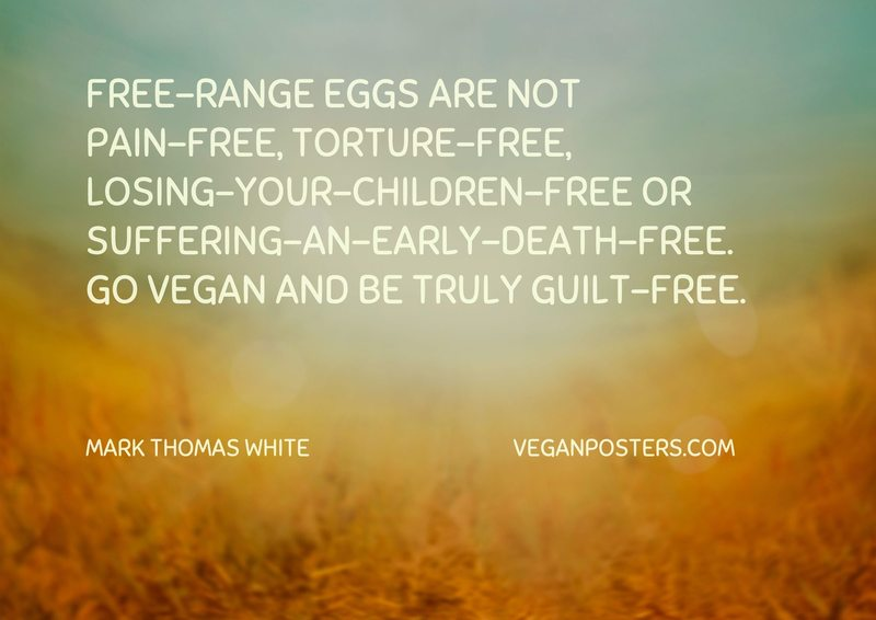 Free-range eggs are not pain-free, torture-free, losing-your-children-free or suffering-an-early-death-free. Go vegan and be truly guilt-free.