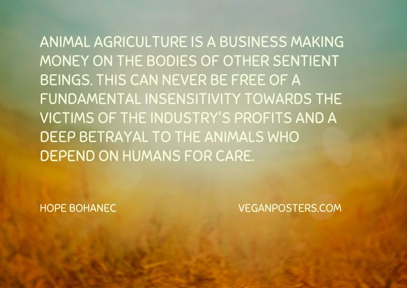 Animal agriculture is a business making money on the bodies of other sentient beings. This can never be free of a fundamental insensitivity towards the victims of the industry's profits and a deep betrayal to the animals who depend on humans for care.