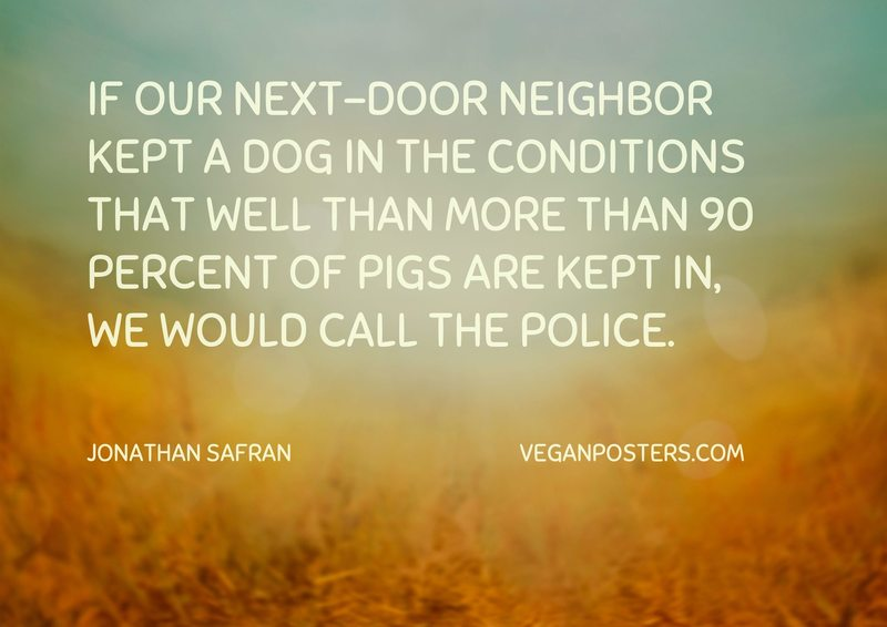 If our next-door neighbor kept a dog in the conditions that well than more than 90 percent of pigs are kept in, we would call the police.