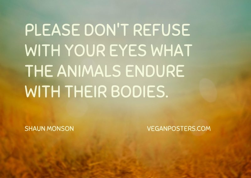 Please don't refuse with your eyes what the animals endure with their bodies.