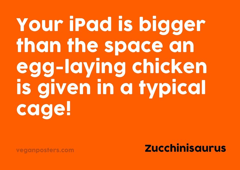 Your iPad is bigger than the space an egg-laying chicken is given in a typical cage!