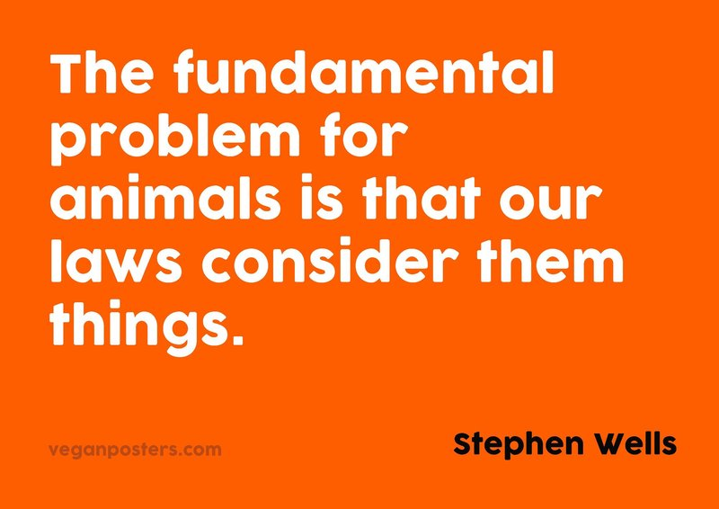The fundamental problem for animals is that our laws consider them things.