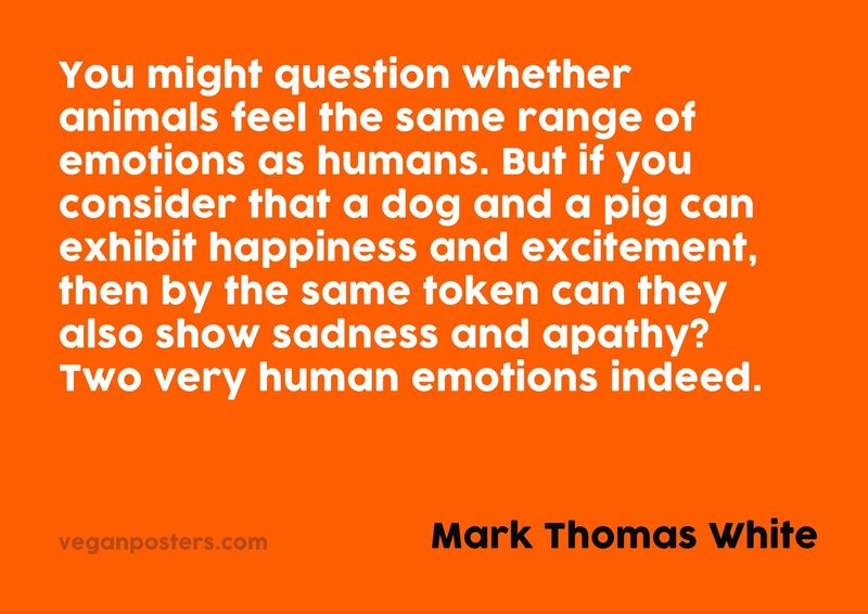 You might question whether animals feel the same range of emotions as humans. But if you consider that a dog and a pig can exhibit happiness and excitement, then by the same token can they also show sadness and apathy? Two very human emotions indeed.