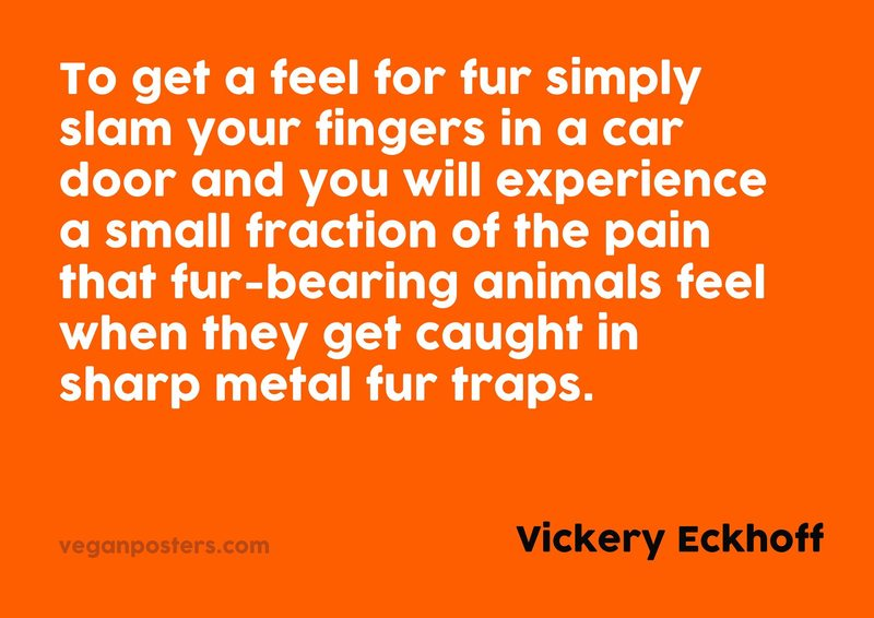 To get a feel for fur simply slam your fingers in a car door and you will experience a small fraction of the pain that fur-bearing animals feel when they get caught in sharp metal fur traps.