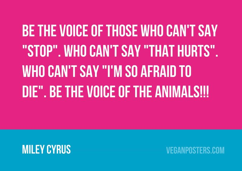 """Be the voice of those who can't say """"Stop"""". Who can't say """"That hurts"""". Who can't say """"I'm so afraid to die"""". Be the voice of the animals!!!"""