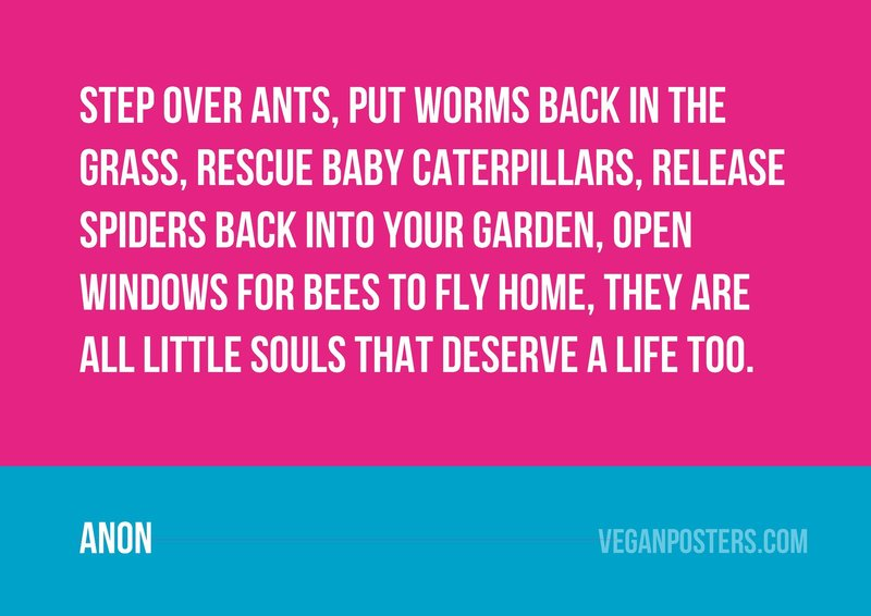 Step over ants, put worms back in the grass, rescue baby caterpillars, release spiders back into your garden, open windows for bees to fly home, they are all little souls that deserve a life too.