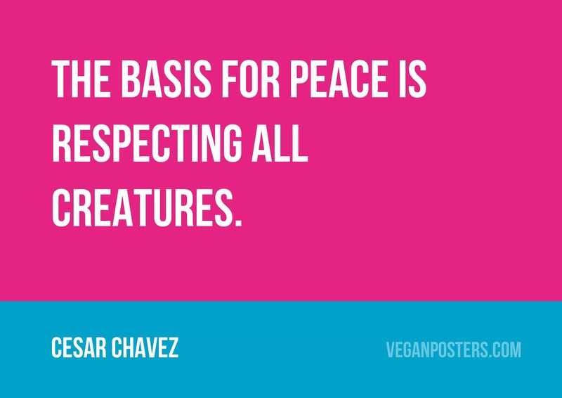 The basis for peace is respecting all creatures.