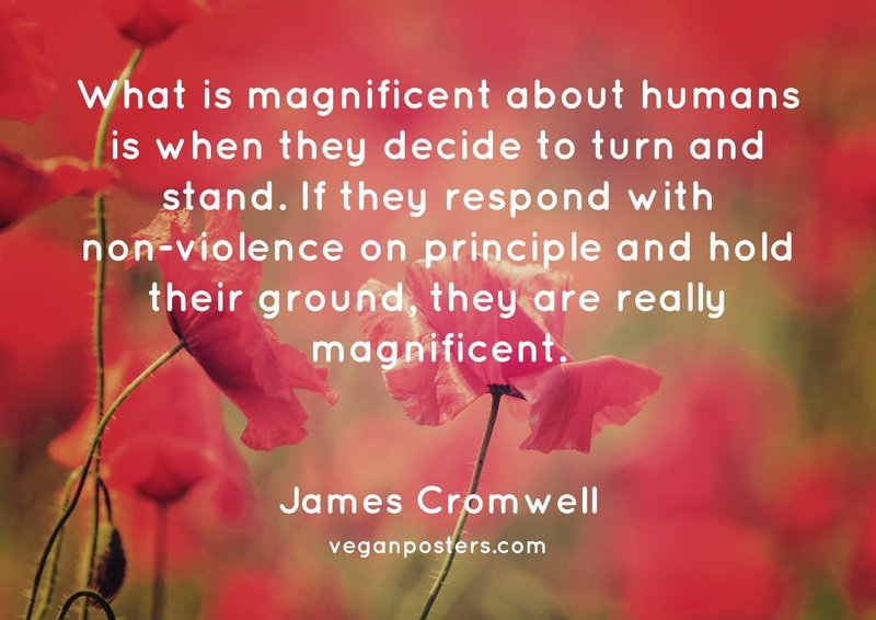 What is magnificent about humans is when they decide to turn and stand. If they respond with non-violence on principle and hold their ground, they are really magnificent.