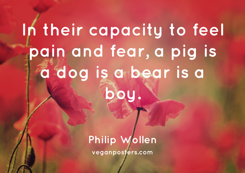 In their capacity to feel pain and fear, a pig is a dog is a bear is a boy.