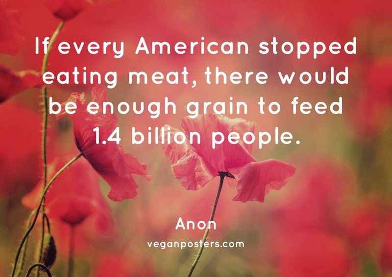 If every American stopped eating meat, there would be enough grain to feed 1.4 billion people.