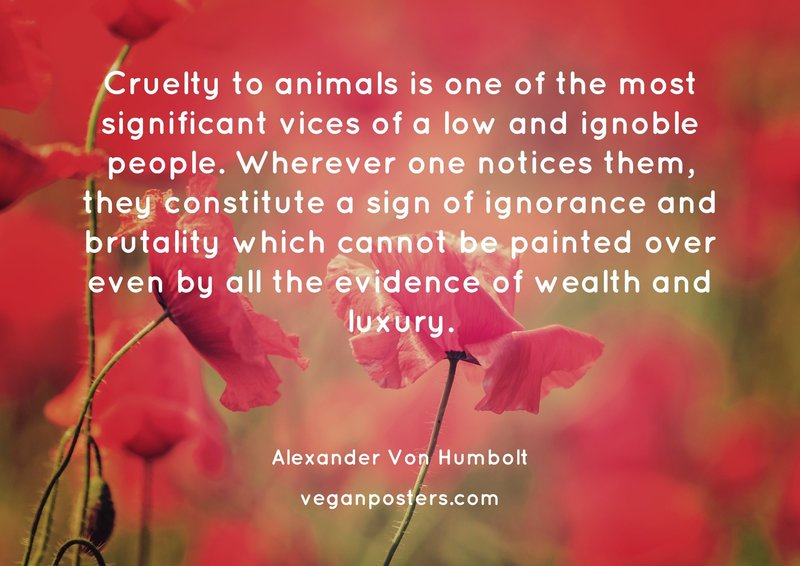 Cruelty to animals is one of the most significant vices of a low and ignoble people. Wherever one notices them, they constitute a sign of ignorance and brutality which cannot be painted over even by all the evidence of wealth and luxury.