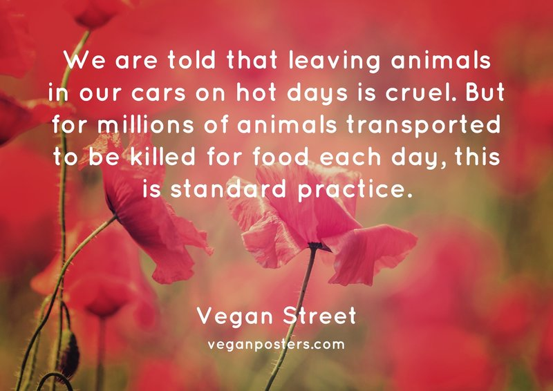 We are told that leaving animals in our cars on hot days is cruel. But for millions of animals transported to be killed for food each day, this is standard practice.