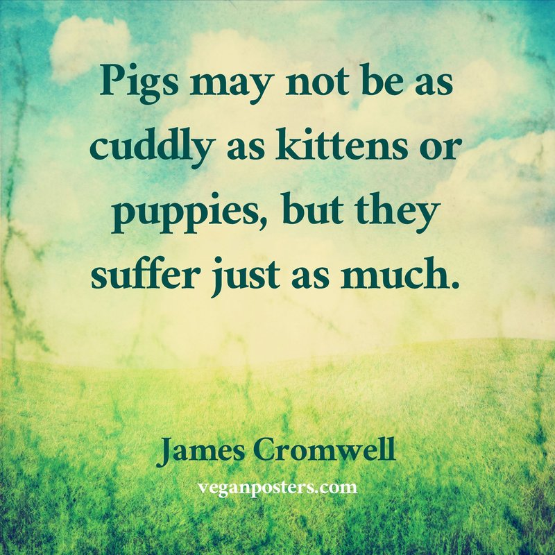 Pigs may not be as cuddly as kittens or puppies, but they suffer just as much.