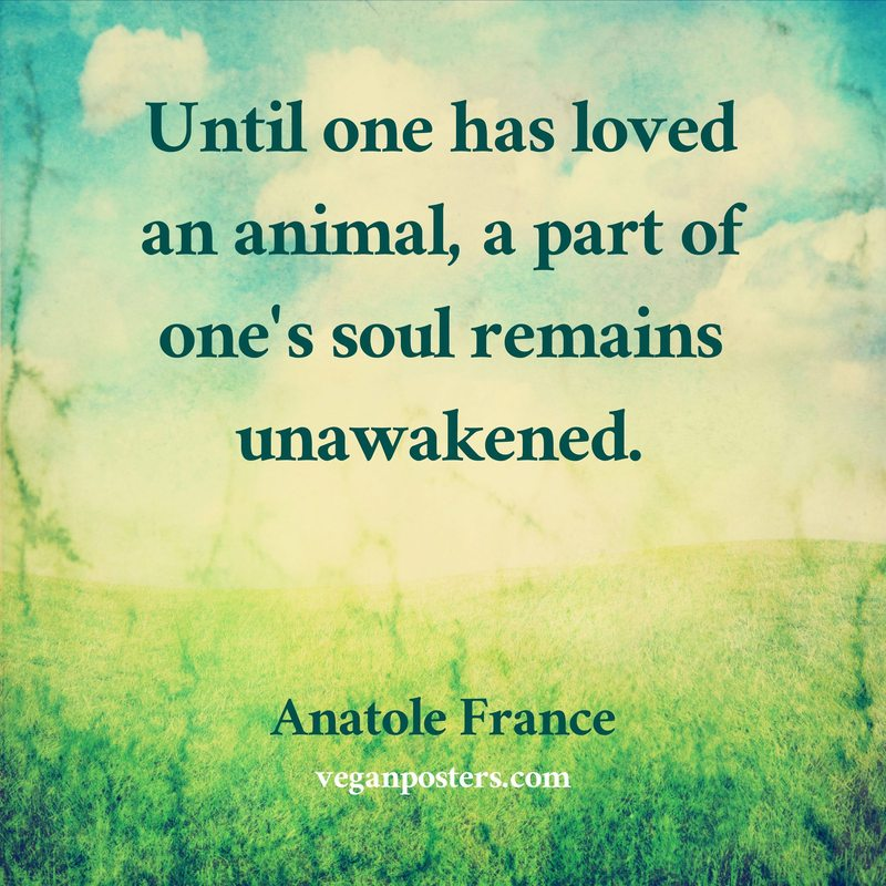 Until One Has Loved An Animal A Part Of One S Soul