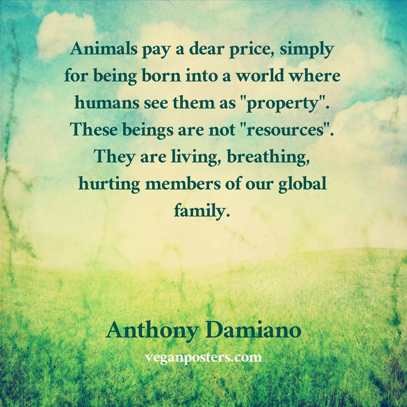 "Animals pay a dear price, simply for being born into a world where humans see them as ""property"". These beings are not ""resources"". They are living, breathing, hurting members of our global family."