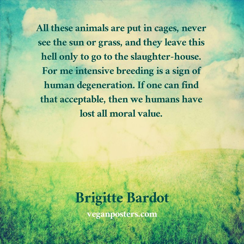 All these animals are put in cages, never see the sun or grass, and they leave this hell only to go to the slaughter-house. For me intensive breeding is a sign of human degeneration. If one can find that acceptable, then we humans have lost all moral value.