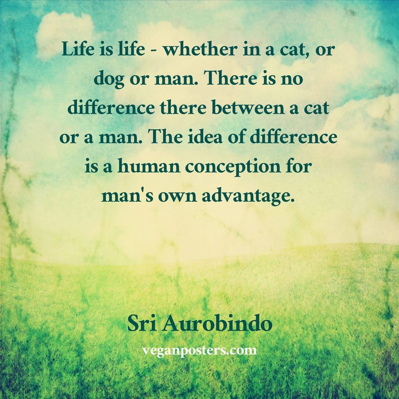 Life is life - whether in a cat, or dog or man. There is no difference there between a cat or a man. The idea of difference is a human conception for man's own advantage.