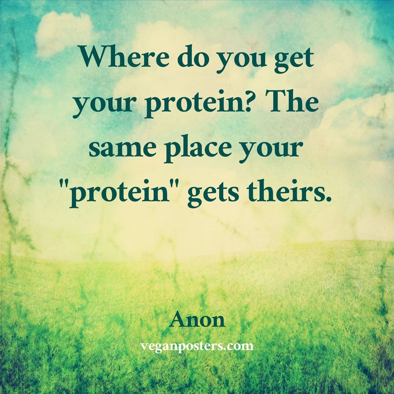 """Where do you get your protein? The same place your """"protein"""" gets theirs."""