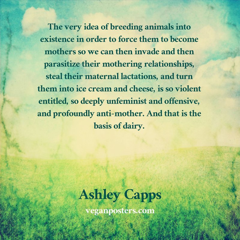 The very idea of breeding animals into existence in order to force them to become mothers so we can then invade and then parasitize their mothering relationships, steal their maternal lactations, and turn them into ice cream and cheese, is so violent entitled, so deeply unfeminist and offensive, and profoundly anti-mother. And that is the basis of dairy.
