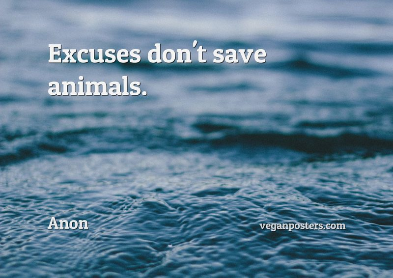 Excuses don't save animals.